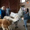 HERD INSTINCT  Smith Voke students find lesson in the barn